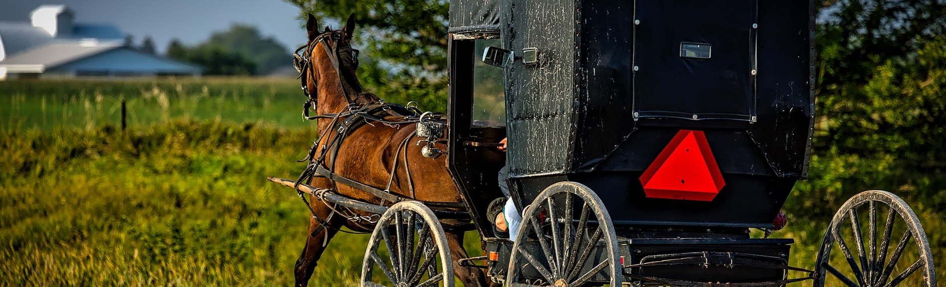Horse and buggy on a country road